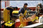 Crtb-marins-pecheurs-300x201